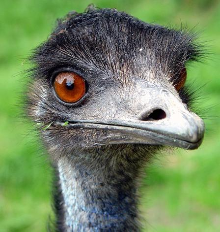 Skin Biology Emu Oil For Skin Reviews Photos Ingredients